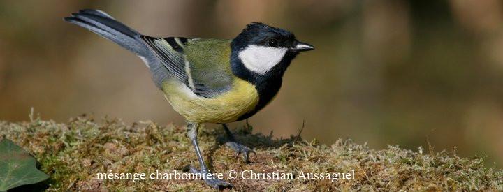 Agir à Villejuif : Risques technologiques sur l'avifaune