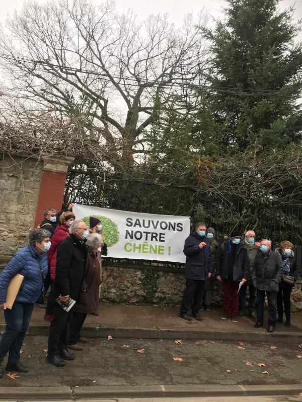 Mobilisation pour la sauvegarde d'un chêne multi-centenaire à St Maur des Fossés